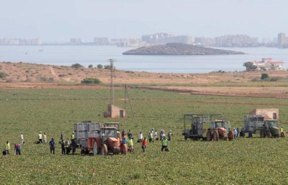 Cultivos cerca del Mar Menor Diario La Opinión